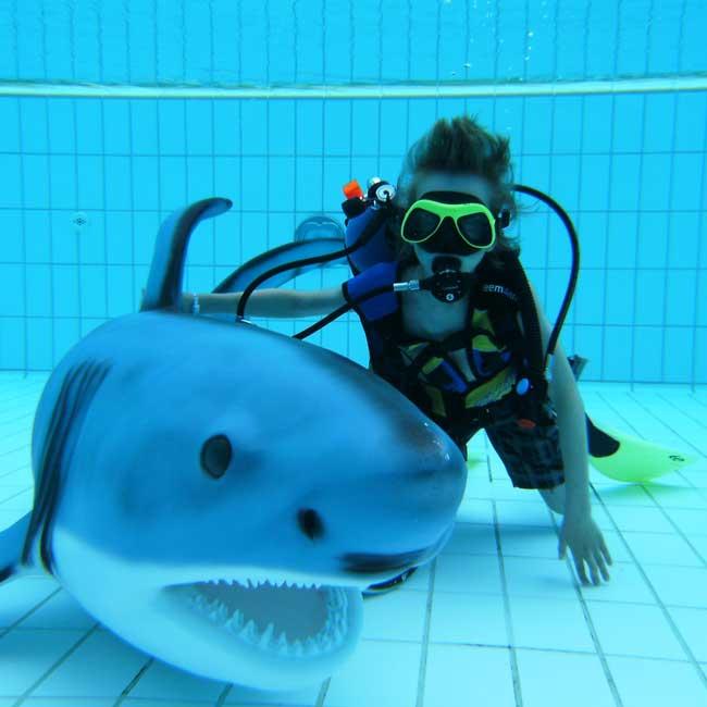 Junior-Haiforscher - leider bereits ausgebucht!